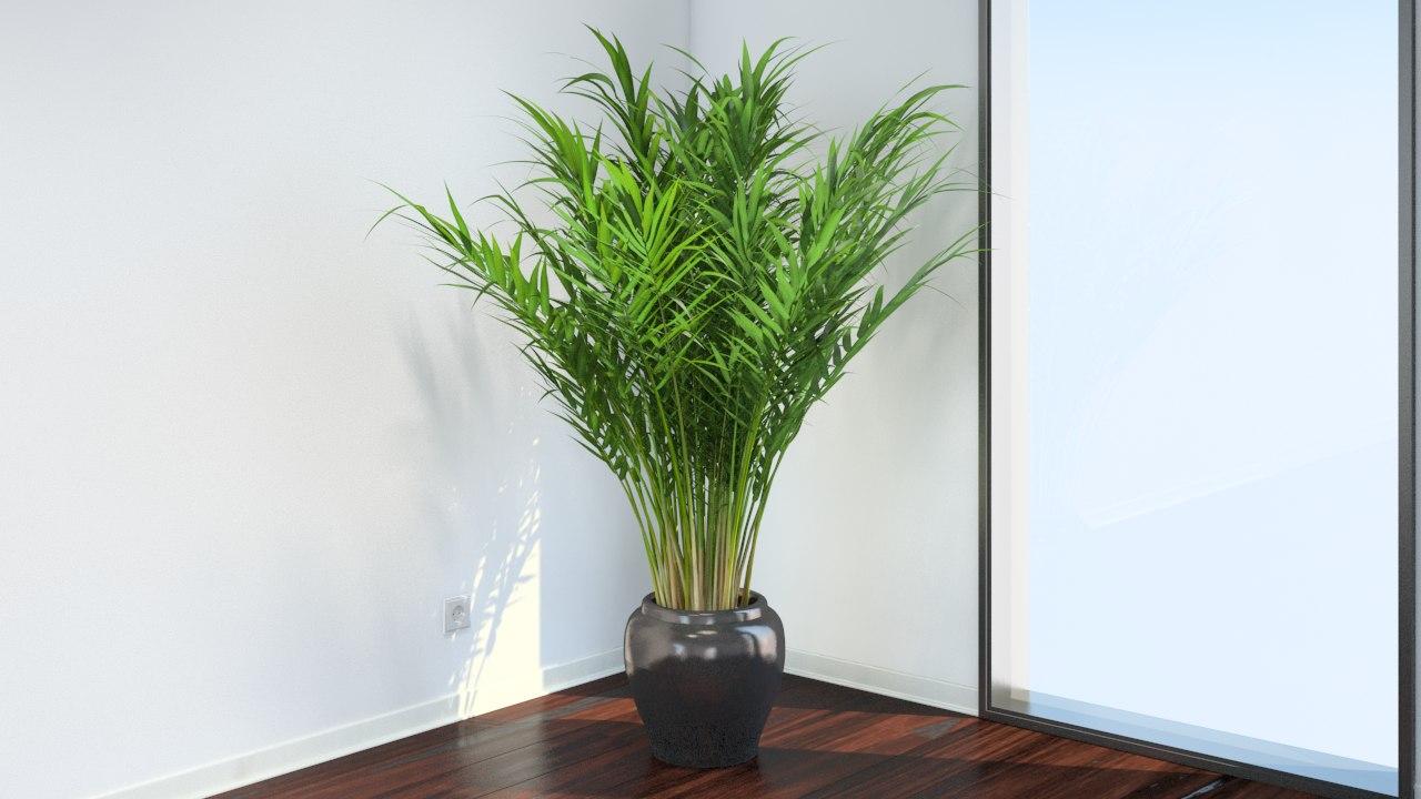 Уход за пальмой арека пальм домашних условиях